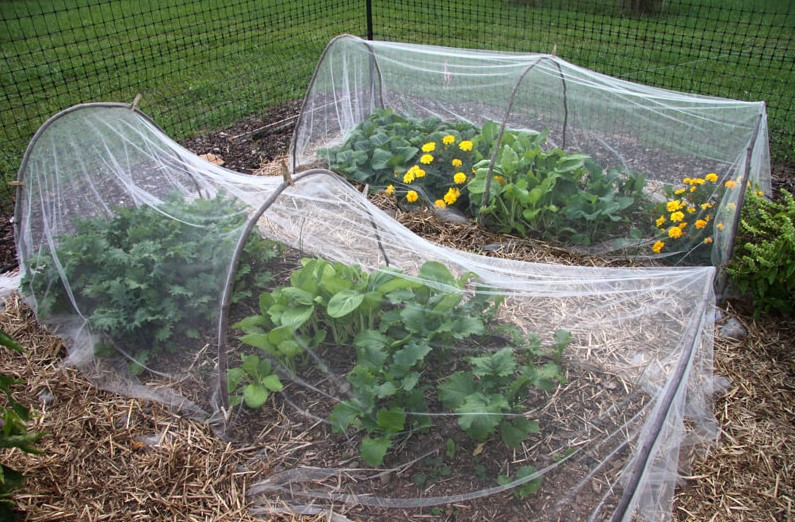 Tips to Protect Plants in the Winter Months